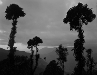 Jungle_Trees_1st_Edit.jpg