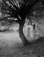 tree_teano.jpg