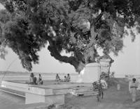 men-gathered-under-tree.jpg
